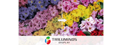 """TRILUMINOS colour"" logotipas"